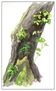Old Broadleaf Maple - Study from Claudia Nice (1 of 1)