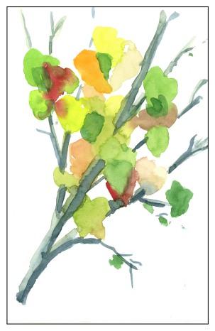 Red Bud Leaves