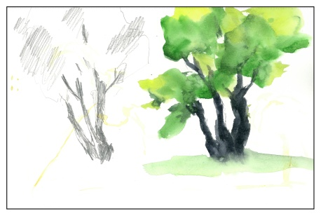 Tree Shapes (2 of 4)