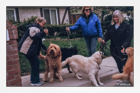 The Dog Walkers Meet