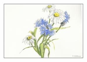 White & Blue Flowers (1 of 2)