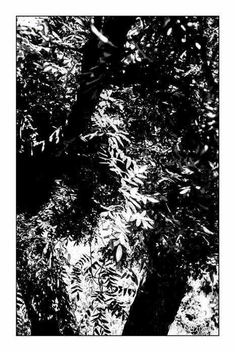 Tree_