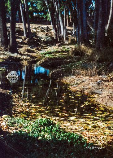 Pentax 6x7 Kodak Portra 400